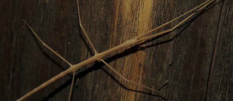 National Moth Week: Cheyenne Mountain State Park Edition